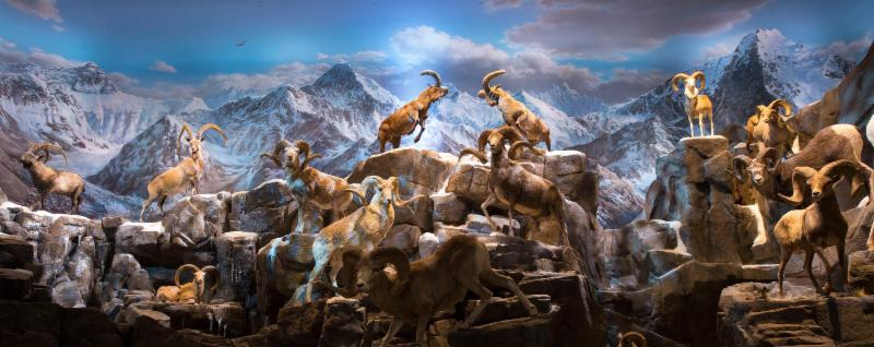 Sheep Mountain-2